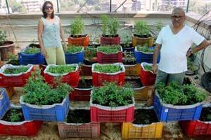 Mumbai residents convert terrace into garden, grow 15 kinds of...