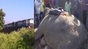 Three elephants, including a baby jumbo, were killed after they were...