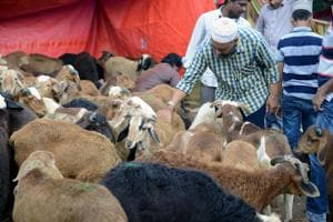 This season, witness goat weddings in Uttarakhand