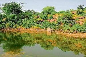Forest department proposes five check dams in Ghata to prevent...