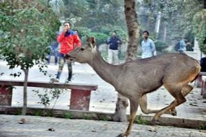 In pics | When a deer ran wild in Amritsar, and was rescued