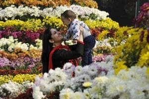 In pics | Fragrance of frolic at flower shows in Chandigarh, Ludhiana