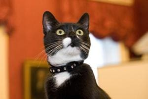 Furry defenders: UK Cabinet Office recruits two new cats in battle...