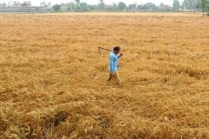 Government-Opposition spar over wheat prices in Rajya Sabha