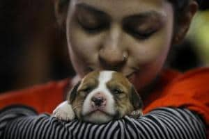 Adopting a pet could help you in dealing with mental health issues
