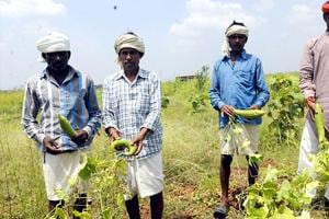 Organic farming brings prosperity to Balaghat dist's women farmers