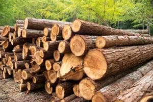 India third-largest importer of illegally logged wood: Study