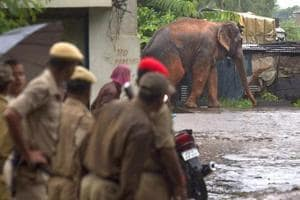 (Representative photo) Groups of villagers are hired by the forest department in Bengal to chase away elephants that regularly stray into villages killing people and destroying property.