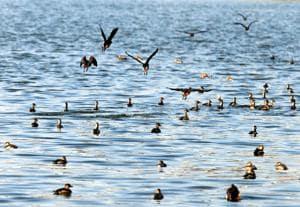 Jharkhand ropes in Kolkata-based ornithologists for bird census