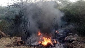 Despite NGT order, waste burning continues unabated in Delhi