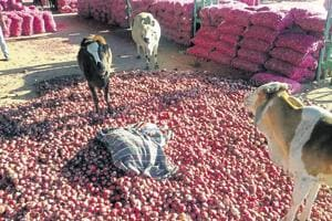 Farmers forced to dump their produce as note ban turns bumper crop worthless