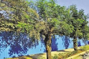 Urban green cover helps reduce heat, says IIT-B study