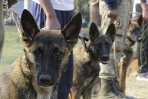 Dogs that guard the White House will now help track tiger poachers in MP