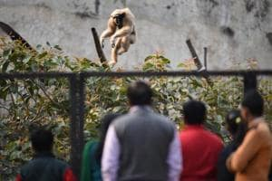 Delhi zoo reopens 84 days after bird flu scare, 6,200 people visit