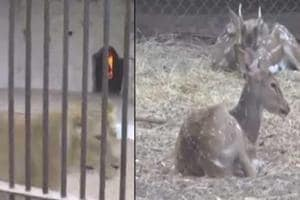 A zoo in Vadodara has made arrangements to keep animals warm and...