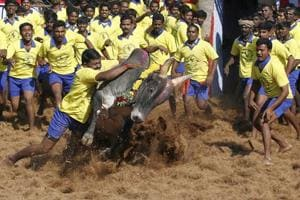 Centre's 2016 notification on Jallikattu balances sport, animal care:...