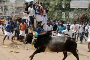 Jallikattu protests continue across Tamil Nadu; ministers hold talks...