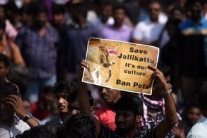 Supreme Court keeps itself away from pro-Jallikattu protests in Tamil...