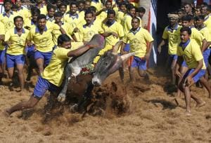 Jallikattu: One succumbs to injuries, toll rises to 3 in Madurai