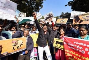Tamil lawyers in the Supreme Court shout slogans during a protest march from Mandi House to Jantar Mantar against the ban on bull-taming sport Jallikattu and animal rights group PETA, in New Delhi on Thursday.