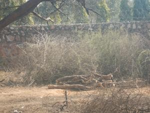 Gurgaon: Over 60 trees felled in Raisina forest area