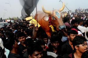 Jallikattu ordinance cleared by law, environment ministries, sent to...