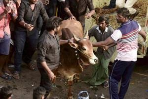 Ordinance by Tamil Nadu under sports category could break Jallikattu...