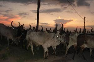 'Cattle smugglers' beaten, arrested near Kherki Daula