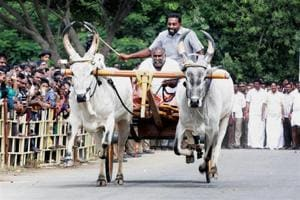 TN govt dubs Jallikattu ordinance 'permanent' remedy, to introduce law...
