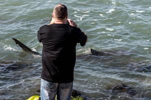 Sharks gather off Israel's Mediterranean coast