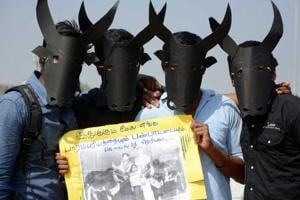 500 bulls to be used for Jallikattu  in Madurai's Avaniapuram on Feb 5