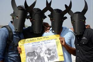 Jallikattu protests: Peace returning to Tamil Nadu a day after...