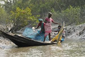 In Sunderbans, no one cares about villagers who go missing in animal attacks