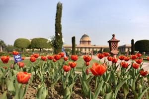 'President Pranab' to bloom at Delhi's Mughal Gardens by March first week