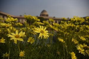 The Mughal Gardens at Rashtrapati Bhavan are opening to the public on February 5.