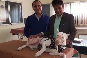 Associate professor Dr Arun Anand and pet owner Sanjeev Kumar (right) with the dog, Eva, in Ludhiana on Thursday.