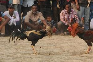Bloodsport of a different kind flourishes in the Sunderbans