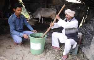 Miyan (right) said it takes 19 days to prepare the bio-pesticide using 'gau-mutra'.