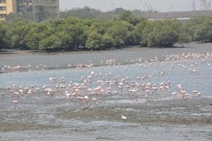 In a first, government identifies 320 wetlands in forests across Maharashtra