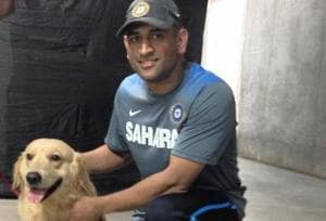 Mahendra Singh Dhoni and his absolute love for his dogs: Watch