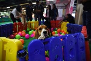 Noida: Pet care industry has everything to gain from India, say experts