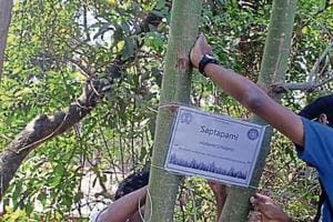 IIT Bombay students map trees, record 40 species in phase 1