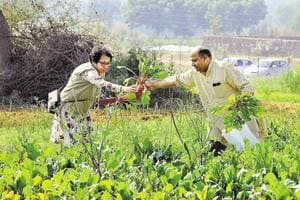 Gurgaon executives toil with families to grow organic vegetables and fruits