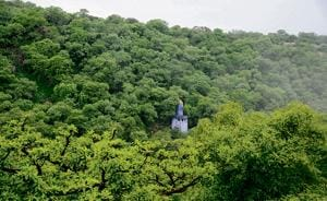 Over 200 trees axed in the Aravallis, forest officials promise action