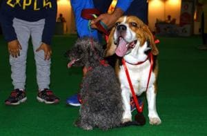 Trade fair salutes bravery of four-legged friends