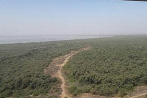Mangroves destroyed off Palm Beach Road in Navi Mumbai, alleges NGO