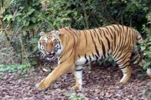 Poaching menace: Shoot-at-sight orders issued at Corbett reserve