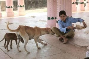Rajasthan: In this govt school, stray dogs snatch students' midday...