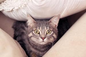 Pet cats exposed to high levels of harmful chemicals at home, says a...