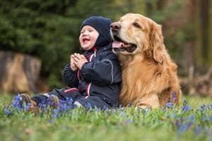 Study shows that dogs, toddlers similar in social intelligence